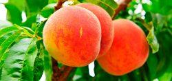 hidrolizado de queratina. Fertilizantes para árboles frutales y plantas y cultivos de campo