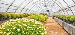 Interior de un invernadero con flores y plantas abonadas con fertilizantes orgánicos y sostenibles